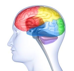 BrainLobes2